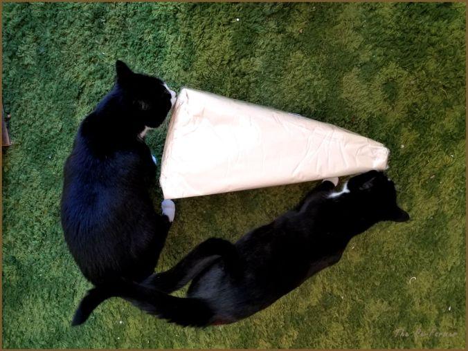 20180117.cat.gift1