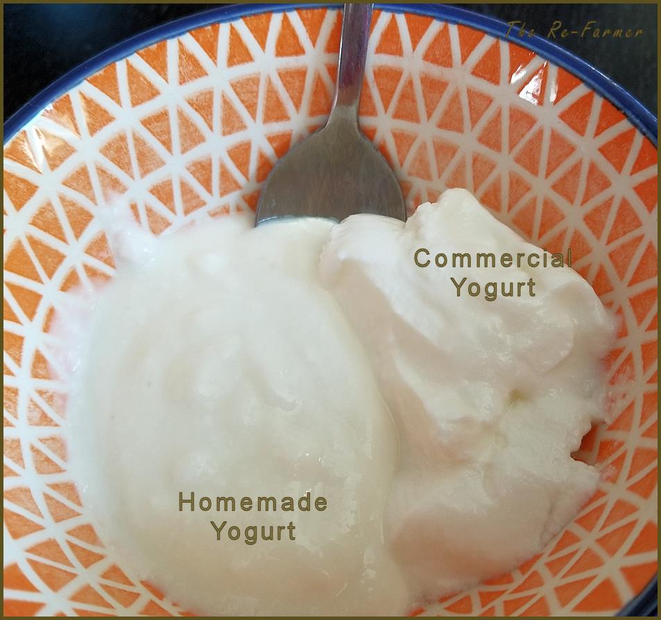 20180129-yogurt6