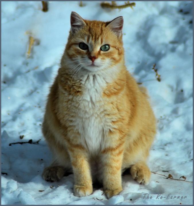 2018-02-18.cat