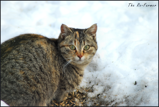 2018-02-25-cat.in.snow