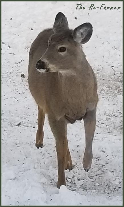 20180205.little.deer