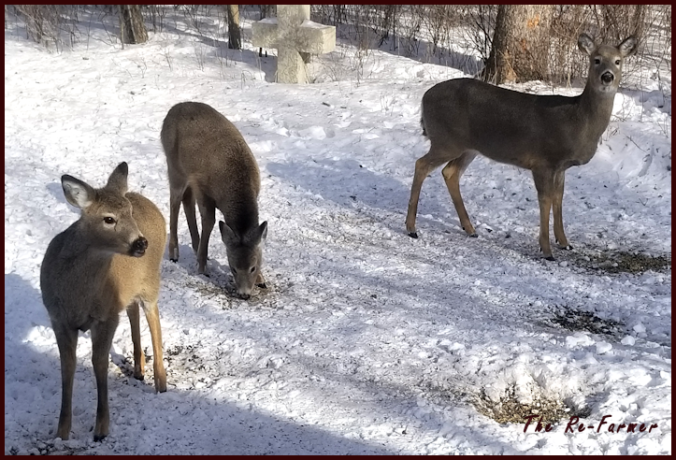 20180219mom.twins.whitetail.deer
