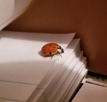 20180225.beetle