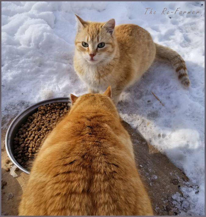 20180228.2.cats