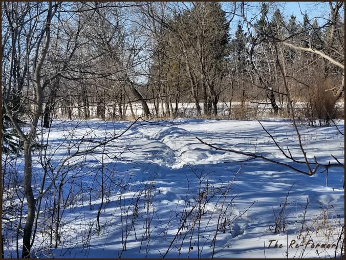 deer.trails.garden