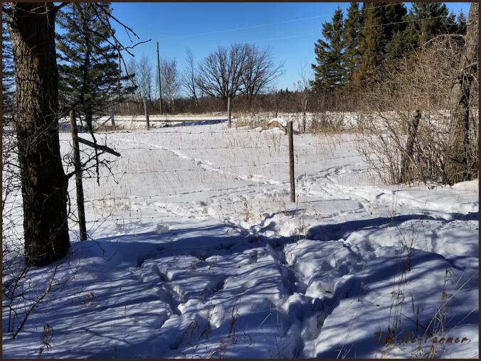 deer.trails.gate