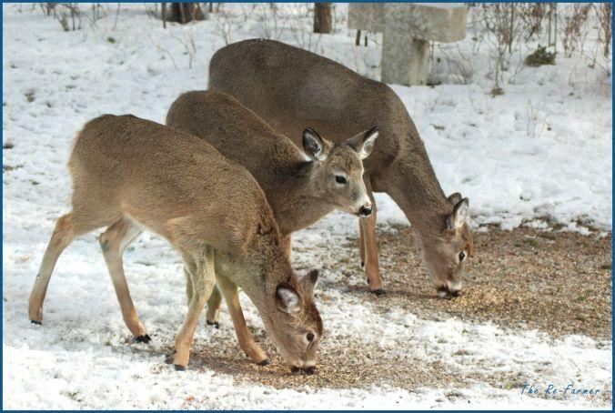 2018-03-03.mama.twins.whitetail.deer