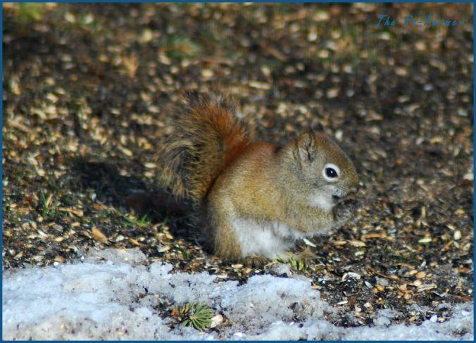 2018-03-03.squirrel