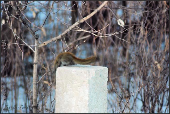 2018-03-22.squirrel