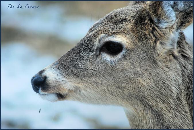 2018-03-24.deer.profile