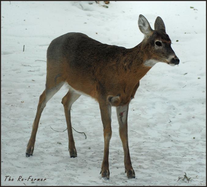 2018-03-25.deer2