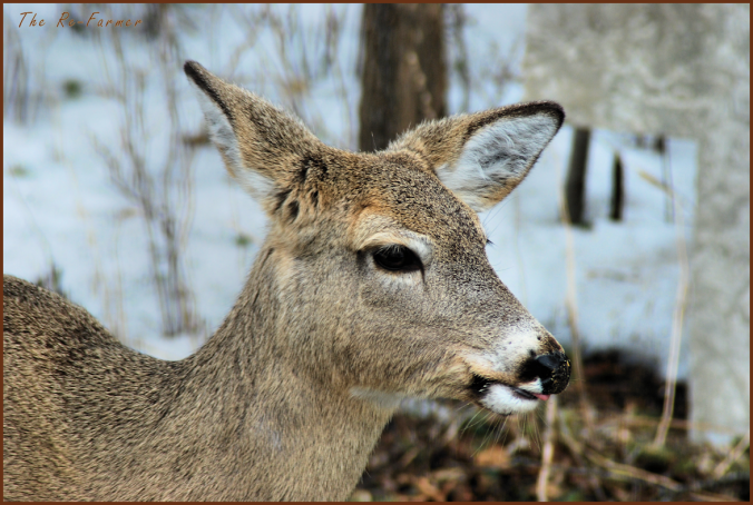 2018-03-26.deer2