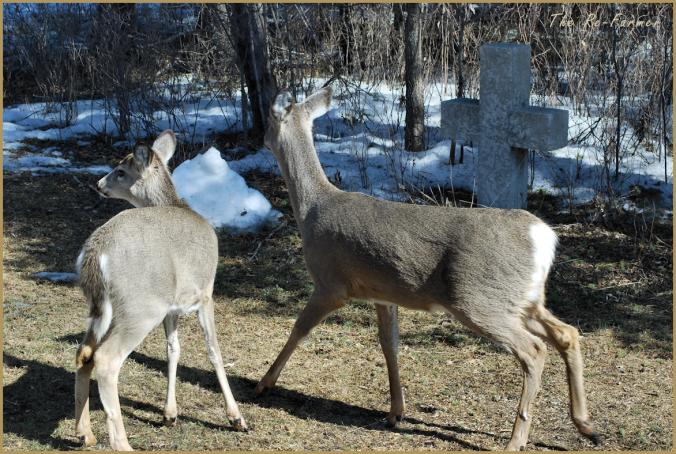 2018-03-27.new.deer