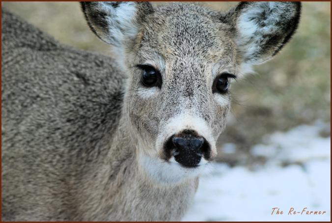 2018-03-30.deer.face