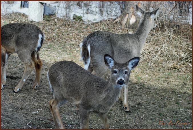 2018-03-30.deer.group