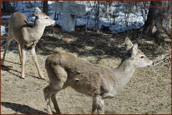 2018-03-30.two.deer1