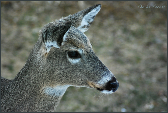 2018-03-31.deer.profile
