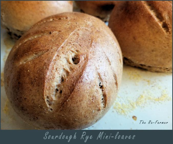 sourdough.rye.baked