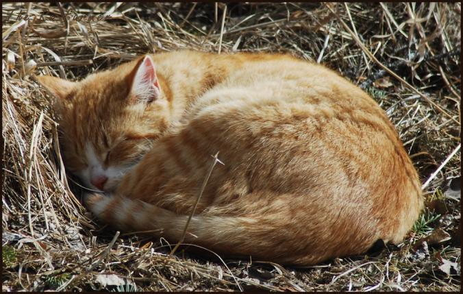 2018-04-04.sleeping.cat