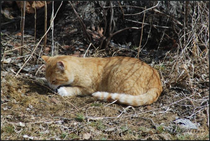 2018-04-17.cat1