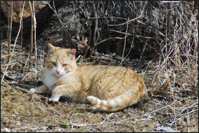 2018-04-17.cat3