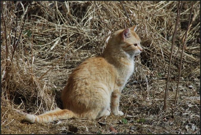 2018-04-17.cat4