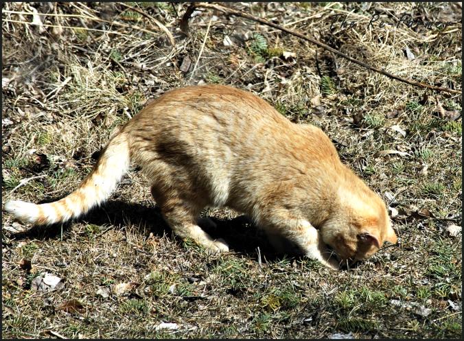 2018-04-17.cat5