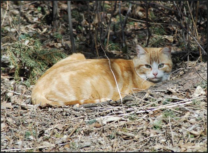 2018-04-17.cat6