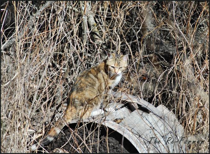 2018-04-17.cat7