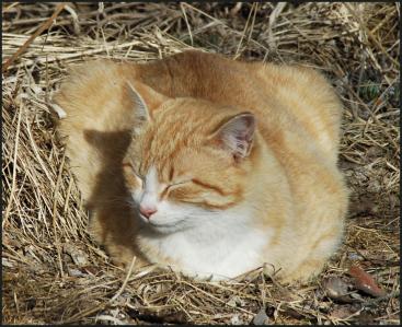 2018-04-18.cat