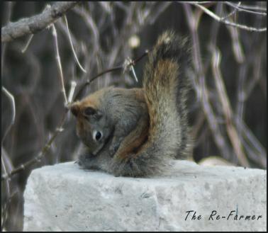 2018-04-18.squirrel