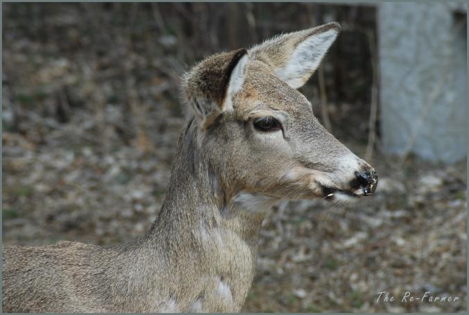 2018-04-20.deer.profile