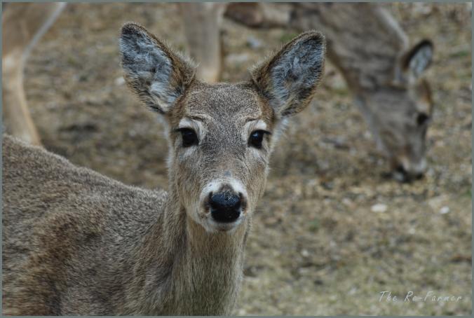 2018-04-20.deer