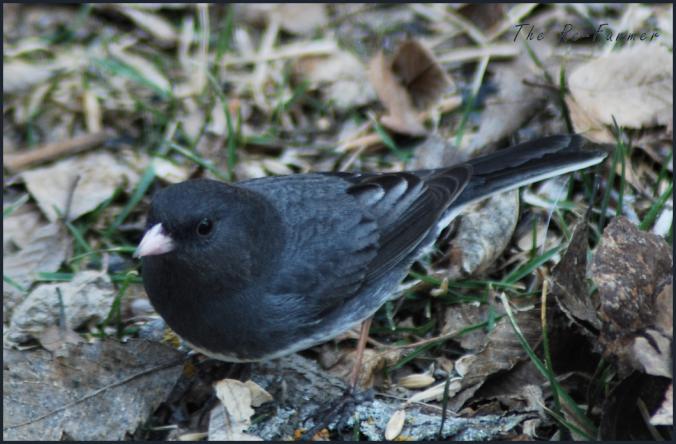 2018-04-21.newbird2