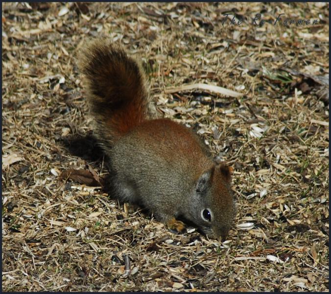 2018-04-21.squirrel