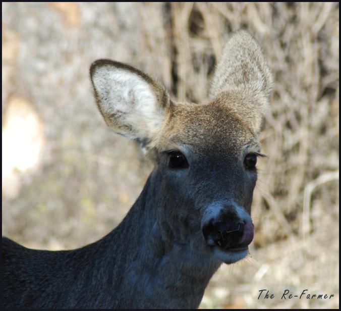 2018-04-22.deer1