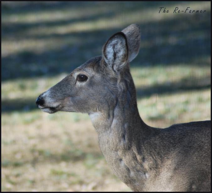 2018-04-22.deer3