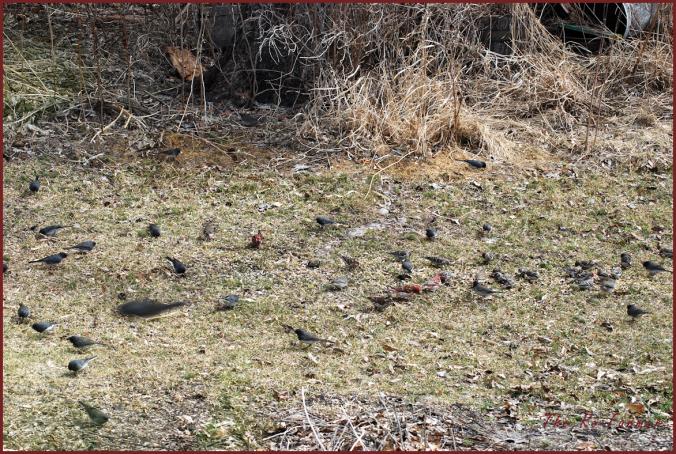 2018-04-22.manybirds