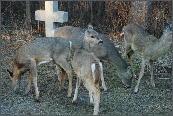 2018-04-24.deer.group