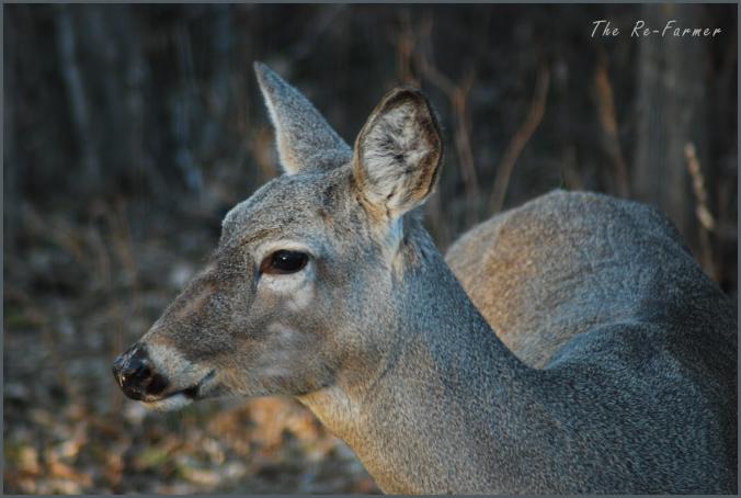 2018-04-24.deer.profile2