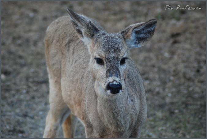 2018-04-24.deer.scars