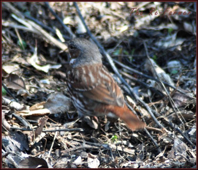 2018-04-30.digging.bird