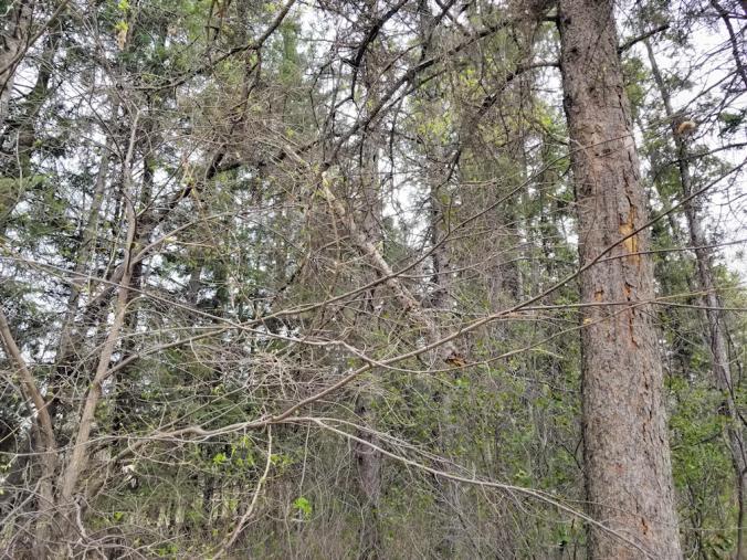 20180515.broken.tree