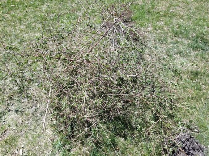 20180521.flower.garden.prunings