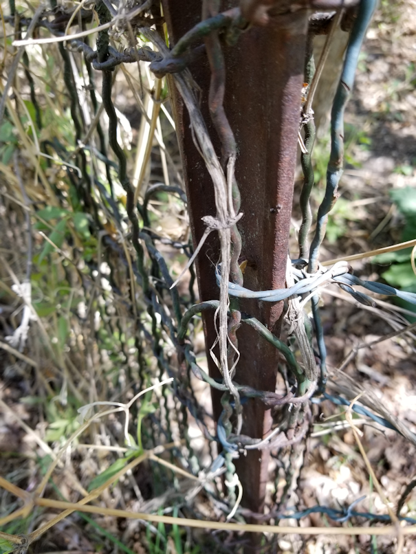 20180521.flower.garden.side.fence.corner.post