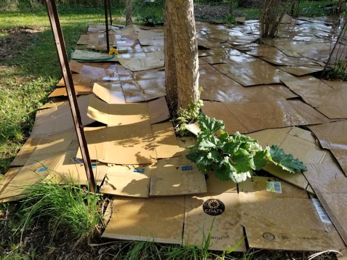 20180522.flower.garden.cardboard.wetting.down2