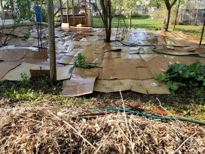 20180522.flower.garden.cardboard.wetting.down3