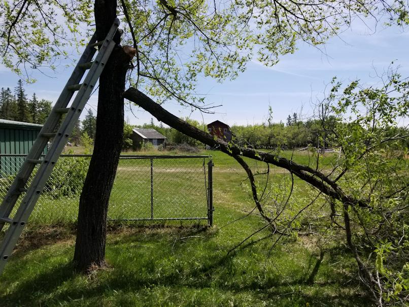 20180528.elm.branch.down