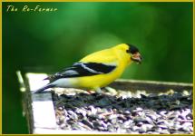 2018-06-15.goldfinch.feeder.platform