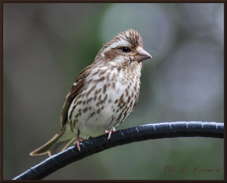 2018-06-24.bird.on.pole